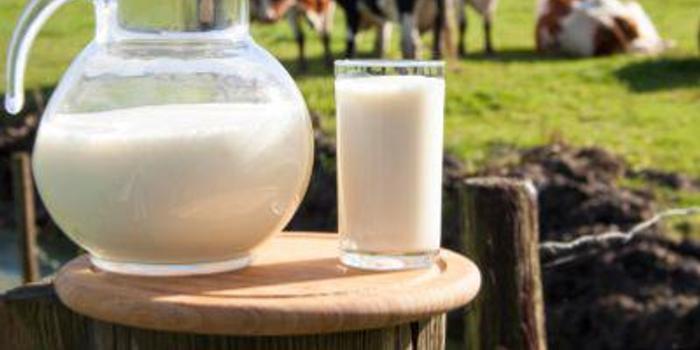 中金:蒙牛乳業上半年增速穩健 目標價升至35.6港元