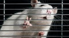 喝王老吉能延寿10%?专家称老鼠试验结论不适用于人
