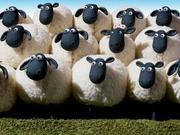 美国两次股灾的启示:新技术下羊群溃散更加迅速