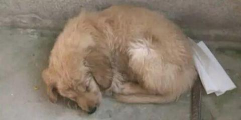 泉州多家宠物店售卖病犬