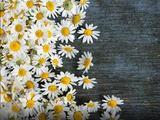 禅诗赏析:满树狂风满树花