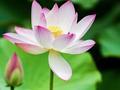 净慧长老:缘起与因果是佛教两大定律