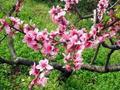 禅诗赏析:一年春尽一年春