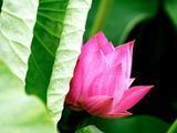 如何理解佛教的因果轮回
