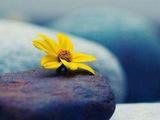 佛教持戒的目的是什么