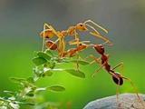 家里有蟑螂蚂蚁怎么办
