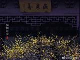 禅诗赏析:宿九华化成寺