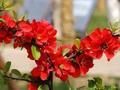 禅诗赏析:花在旧时红处红