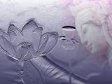 佛菩萨为什么都坐莲花