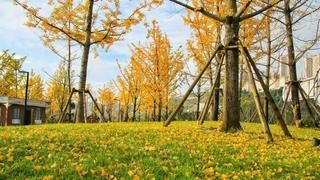 金色秋天金彩盤州