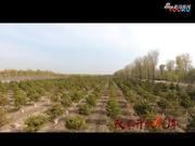 视频:永恒的造林梦 不变的绿色旋律