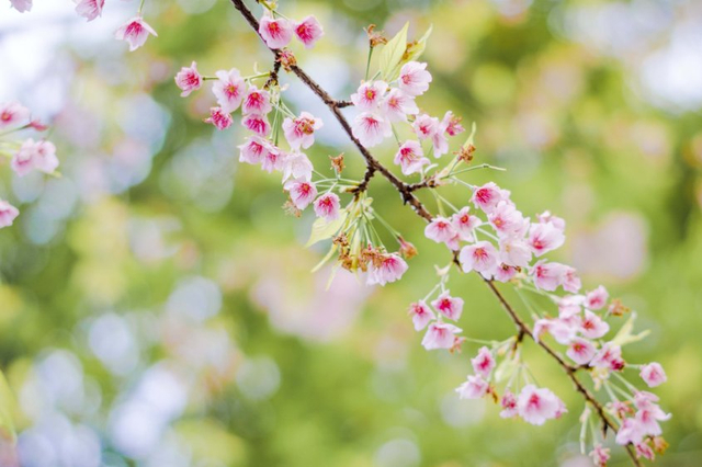 东京樱花攻略|用一场粉红色的旅程告别寒冬