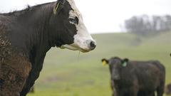 中国中产崛起带动巨大市场 牛肉消费数据攀升
