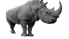 """评论:""""这头灰犀牛是我们自己慢慢养大的"""""""