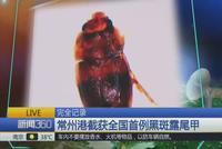 常州港截获全国首例黑斑露尾甲 或威胁粮食安全