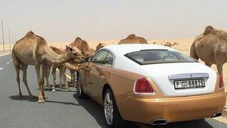 """这""""美景""""只有在迪拜才能遇上"""