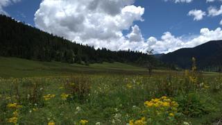 西藏林芝鲁朗小镇 一个迷人的地方