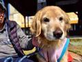 老人生病爱狗离家出走被家人骂狠心,当家人找到狗时被它行为感动