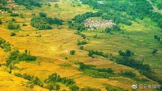 秋天,元陽梯田的稻谷成熟,隨著山勢的起伏