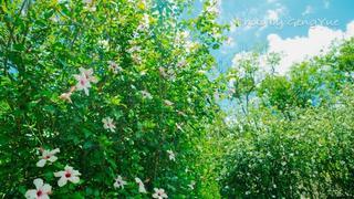 满眼绿色,空气清新,坐在英式庄园里喝下午茶