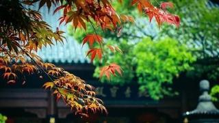 杭州靈隱寺 初日照高林