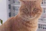 兔子突然闯进家里,一进门就扑倒橘猫,主人看到橘猫的表情笑喷了