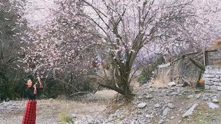 西藏林芝桃花沟,人间天堂。