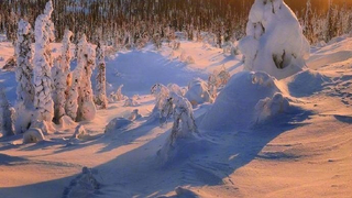 冬季俄罗斯,阳光下的雪景