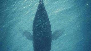 林深时见鹿,海蓝时见鲸!