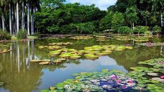 云南植物王国中的绿色明珠,西双版纳热带植物园