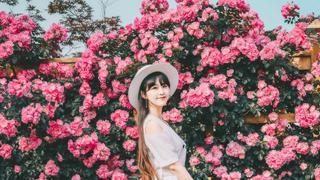 蔷薇花绽放的季节