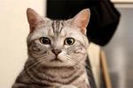 惊天发现!原来用梳子能遥控猫咪!猫咪表情包喵喵学堂 图片