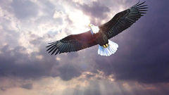 15华信债和14富贵鸟大跌点评:敲响信用风险的警钟