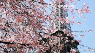 春天了微风中都是粉色香味