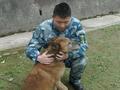 """狗年话军犬 这个敢怼领导的""""军犬班长"""",军龄已经十年了"""