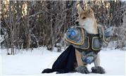 一只宠物狗COS了阿尔萨斯 这才是名副其实的巫妖汪