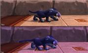 8.0测试服前瞻 德鲁伊猫形态奔跑与行走动画更新