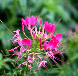 广州最赞骑行线路美开了花!