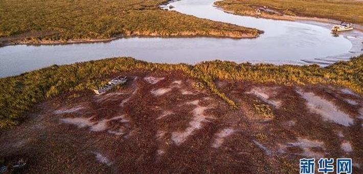 航拍世界最大麋鹿群争渡