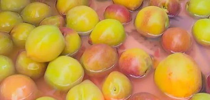 这种桃李是潮汕人夏天的舌尖记忆