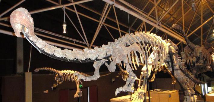 云南禄丰发现恐龙新属种
