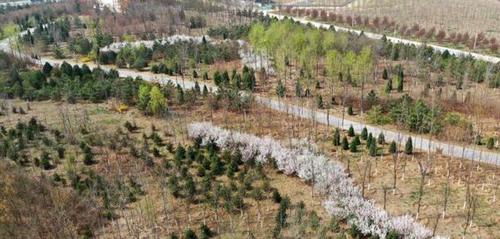 雄安新区造林面积已达41万亩