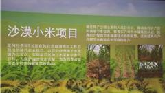 SEE节水小米 留住沙漠的生机