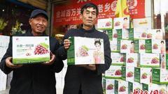 兰州志愿者三年接力义卖红提扶农助困 日销逾万斤