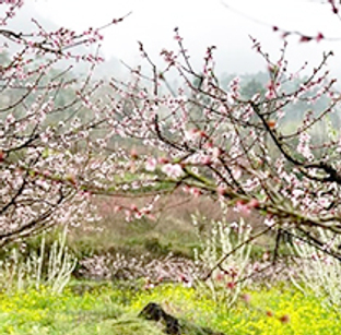 桂林春至烟雨朦胧