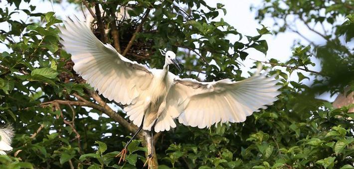 鹭鸟天堂——广西象州古德湿地