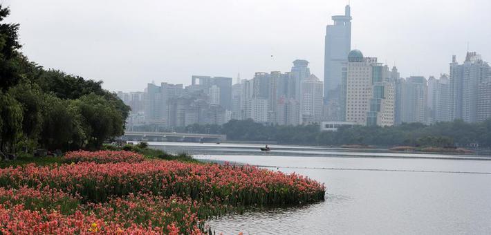 南宁:南湖岸边花飘香