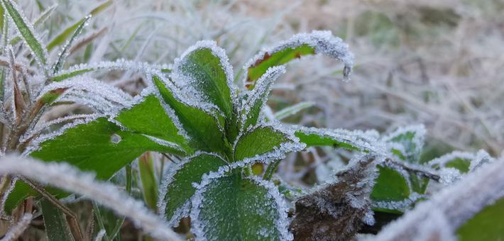 广西柳州、梧州等地迎今年初霜