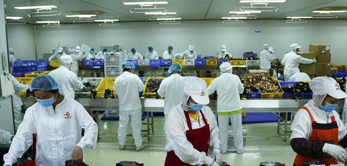 广西柳州:螺蛳粉企业复工忙
