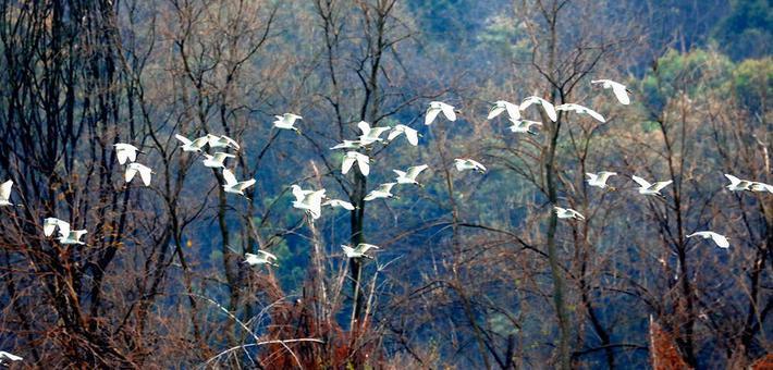 桂林漓江:白鹭翩翩入画来